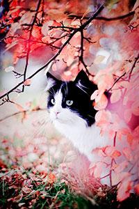 Аватар вконтакте Черно- белый кот под цветочным кустом