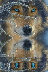 Аватар вконтакте Снежный волк внимательно смотрит