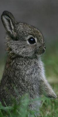 Аватар вконтакте Кролик стоит на двух лапках на зеленой траве