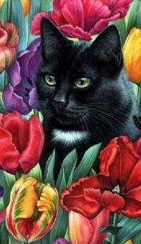 Фото черного кота в цветах