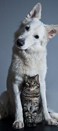 Аватар вконтакте Белая собака и полосатый кот