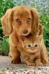 Аватар вконтакте Щенок и котенок внимательно куда-то смотрят