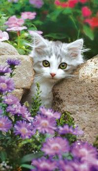 Аватар вконтакте Котенок в цветущем саду