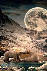 Аватар вконтакте Два полярных медведя на льдине ночью в полнолуние