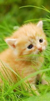 Аватар вконтакте Бело-рыжий котенок сидит на зеленой траве