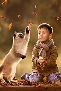 Аватар вконтакте Мальчик наблюдает как сиамская кошка ловит падающие пожелтевшие листья. фотограф Елена Шумилова