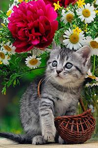 Аватар вконтакте Короткошерстный серый котенок играет с плетеной корзинкой под букетом цветов