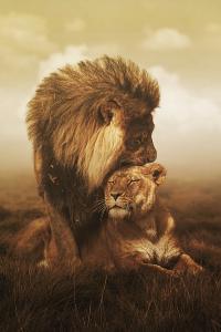 Аватар вконтакте Львиная любовь, лев и его львица