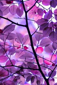 Аватар вконтакте Красивые фиолетовые листья на ветке