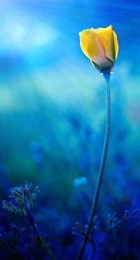 Аватар вконтакте Желтый цветок на синем фоне