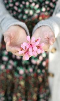 Фото цветы в руке