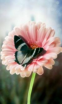 Аватар вконтакте Бабочка на цветке
