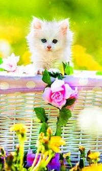Аватар вконтакте Белый котенок сидит в корзинке на салатовом фоне