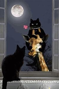 Аватар вконтакте В ночь полнолуния котик, с алой розой в зубах, с помощью жирафа добрался до окна кошечки