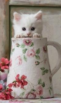 Аватар вконтакте Милый белый котенок в вазе