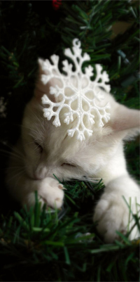 Аватар вконтакте Белый кот спит на елке