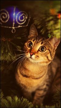 Аватар вконтакте Полосатая кошка смотрит на елочный шарик