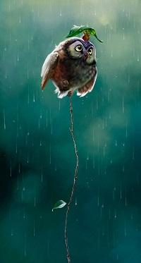 Аватар вконтакте Сова сидит на очень тонком дереве, на голове у нее сидит мышь, которая держит в лапках листок, укрываясь им от дождя, by Therese Larsson