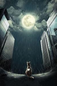 Аватар вконтакте Кошка сидит под дождем и смотрит на Луну, by josephine