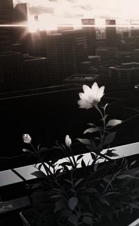99px.ru аватар Цветок на фоне города
