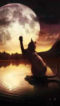 Аватар вконтакте Кот тянется лапой к луне