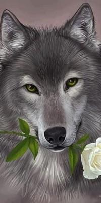 Аватар вконтакте Волк с белой розой в зубах