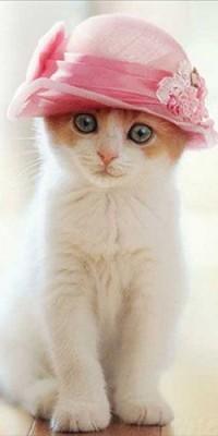 Аватар вконтакте Котенок с розовой шляпкой на голове