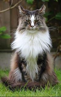 Аватар вконтакте Кошка сидит на траве