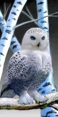 Аватар вконтакте Белая полярная сова сидит на заснеженной ветке березы