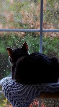 Аватар вконтакте Черный кот сидит у окна в каплях от дождя