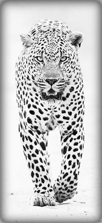 Аватар вконтакте Красивый белый леопард