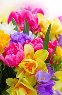 Аватар вконтакте Желтые нарциссы, розовые тюльпаны и сиреневые крокусы