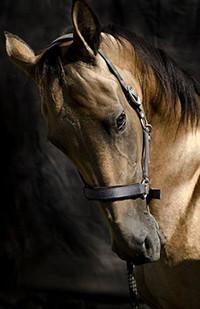 Аватар вконтакте Коричневая лошадь на темном фоне
