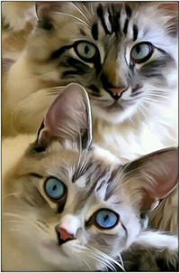 Аватар вконтакте Кошка с зелеными глазами и котенок с голубыми глазами
