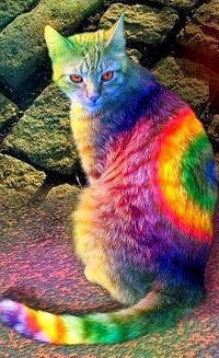 Кот с хвостом радуги