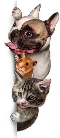 Аватар вконтакте Из-за угла выглядывают собака, хомячок и кошка, Dogs Hamsters Cats