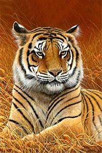 Аватар вконтакте Тигр лежащий в траве