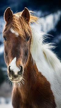 Аватар вконтакте Лошадь с белой гривой
