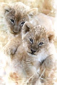 Аватар вконтакте Два львенка играют, художник Paul Miners