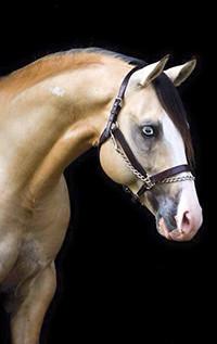 Аватар вконтакте Лошадь в профиль на темном фоне