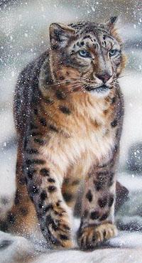 Аватар вконтакте Снежный барс смотрит вперед, by Christina Schulte