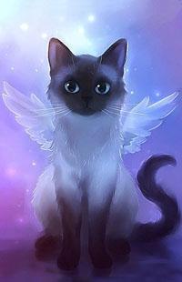 Аватар вконтакте Кошка -ангел смотрит вперед, by Apofiss