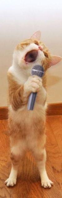 Аватар вконтакте Рыжий кот с микрофоном в передних лапах исполняет песню под караоке