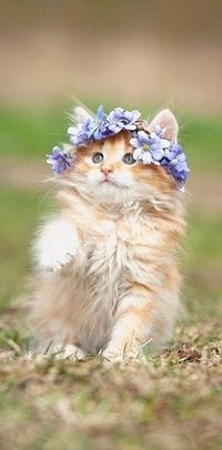 Аватар вконтакте Пушистый котенок в веночке из голубых цветов