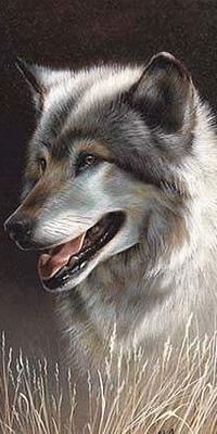 Аватар вконтакте Красивый волк сидит в сухой траве, раскрыв пасть и высунув язык