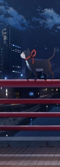 Аватар вконтакте Кошка с ленточкой стоит на ограждении на фоне ночного города