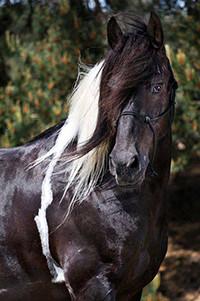 Аватар вконтакте Лошадь с длинной гривой
