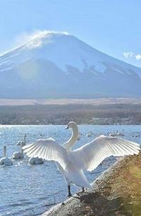 Аватар вконтакте Лебеди в озере у подножья горы