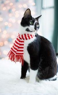 Аватар вконтакте Кот в шарфе сидит на снегу