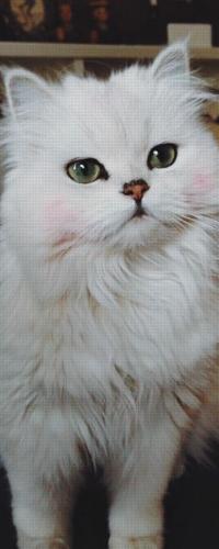 Аватар вконтакте Красивая пушистая кошка